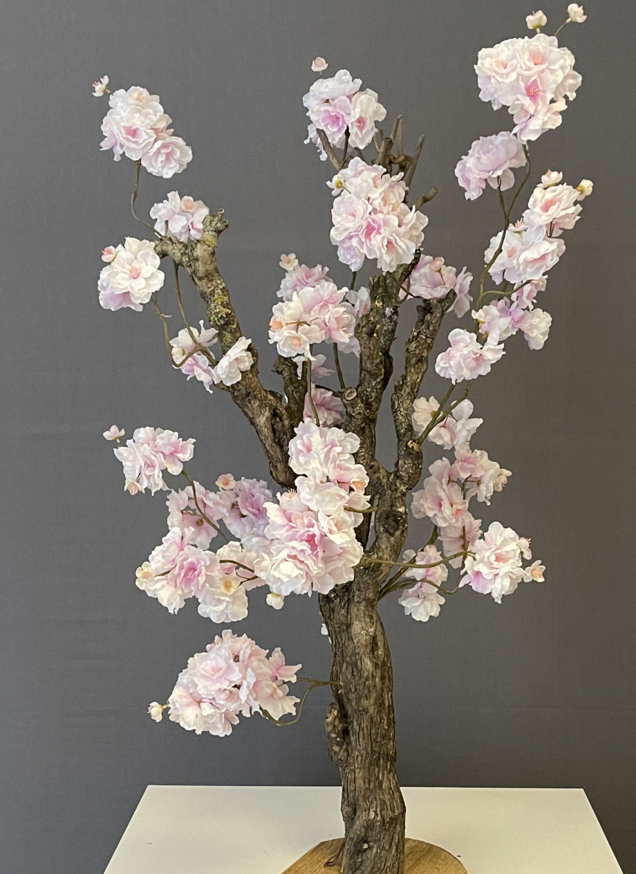 sakura bloesemboom