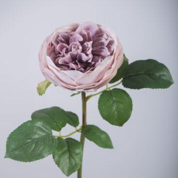 Roos kunst Lilac kleur