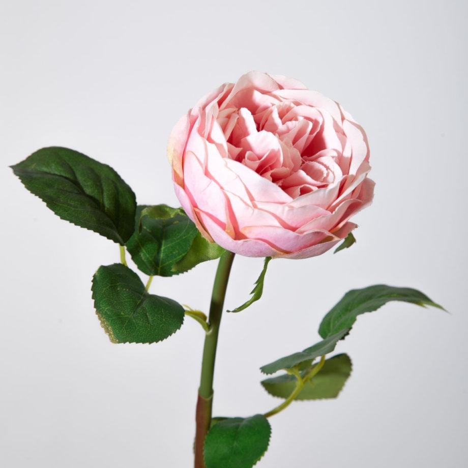 zijde roos