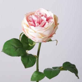 creme roze kunst roos