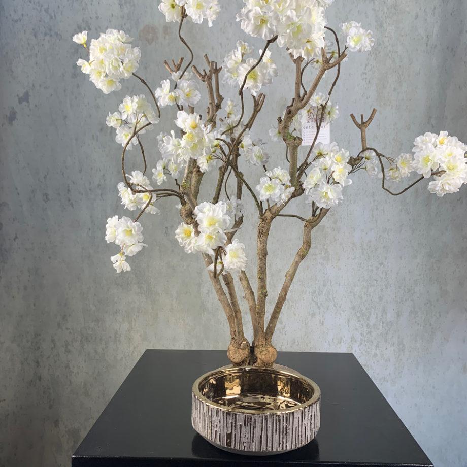 witte kersen bloesem boom