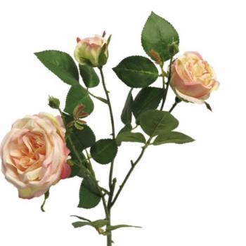 peach kleurige roos