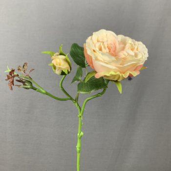 peach kleurige kunst roos