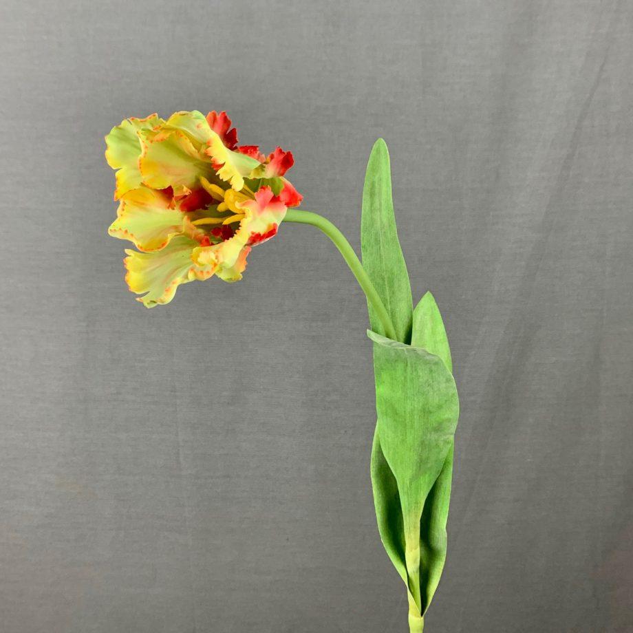 Kunst parrot tulp
