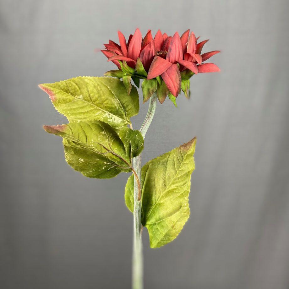 helianthus herfstkleur
