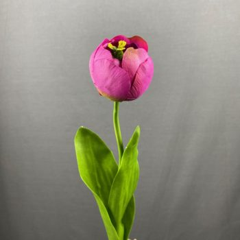 paars kleurige tulp