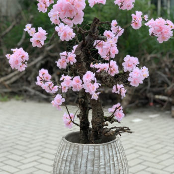 roze bloesemboom