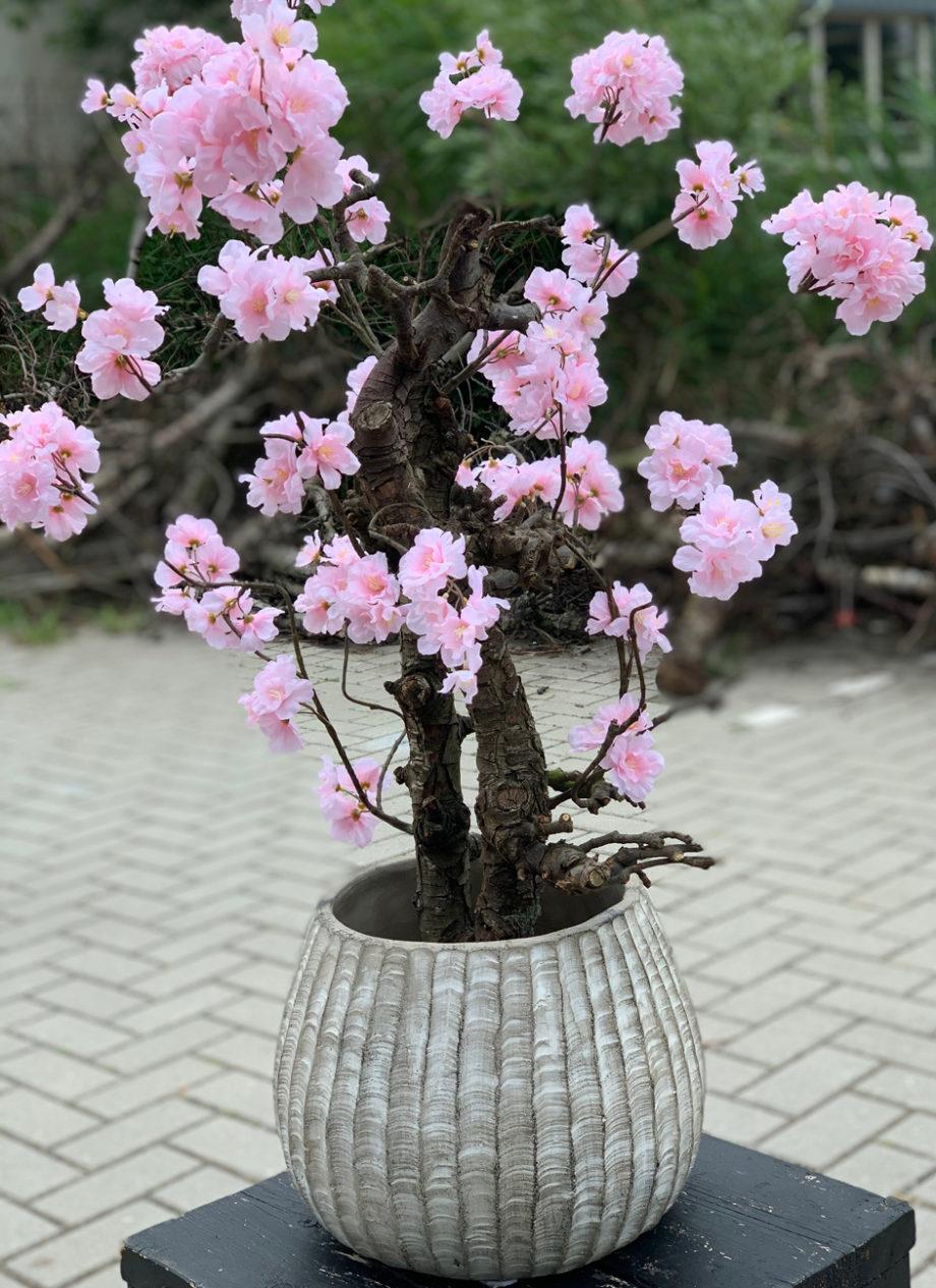 bloesemboom roze