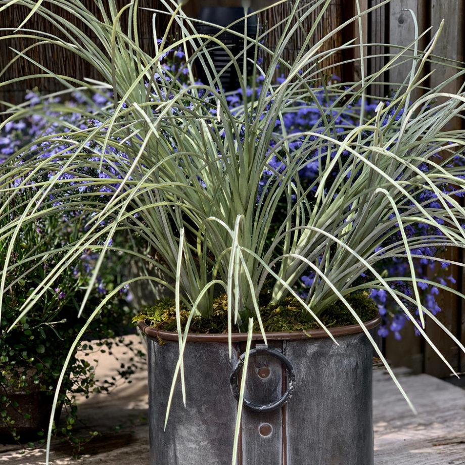 Grasplant compleet