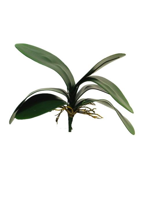 orchidee blad toef