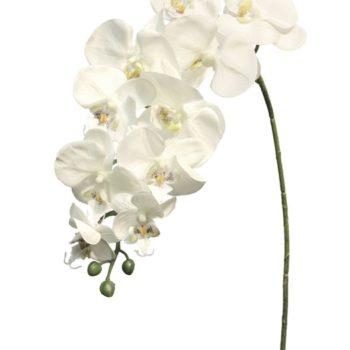 orchide tak