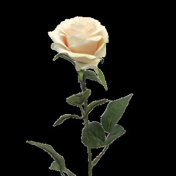 zacht zalmroze kunst roos
