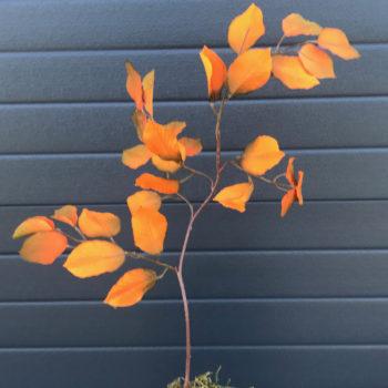 oranje herfst blad