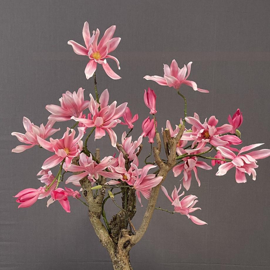Roze Magnolia