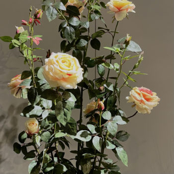 rozen struik
