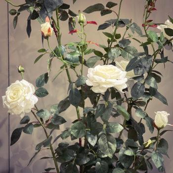 Kunst rozen