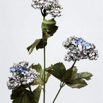 Achillea blauw