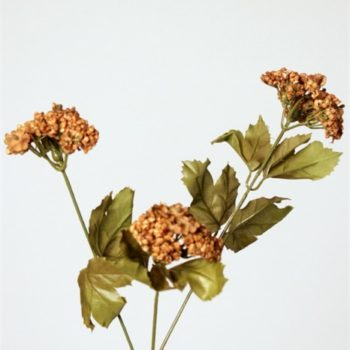 Achillea bruin